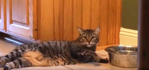 Katinas - tinginukas 80 lvl